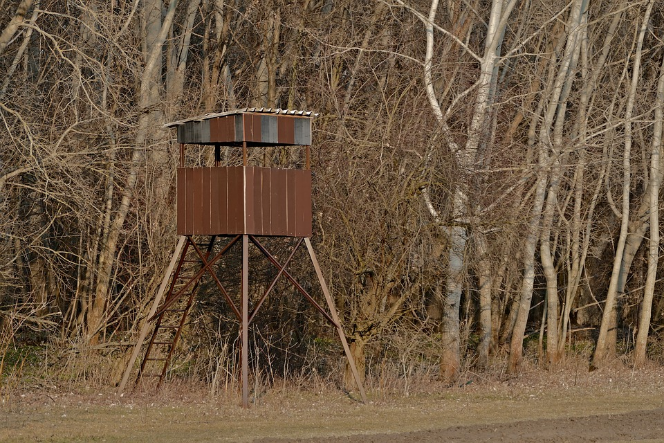 Nature, Forest, Trees, Ladder, Hunting, Views, Shed