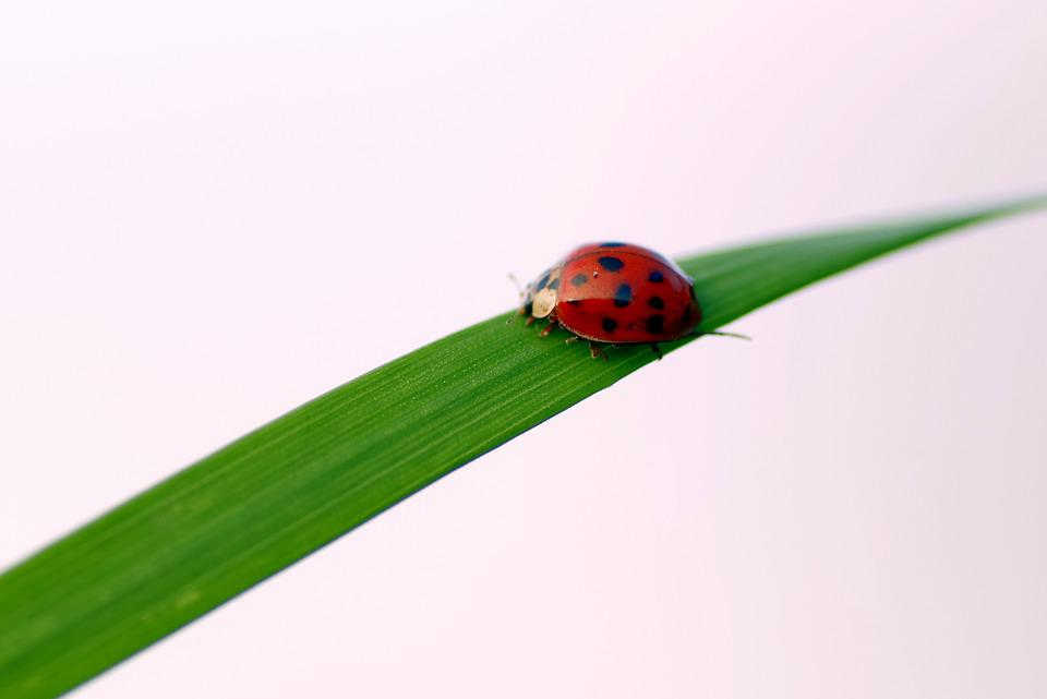 Ladybug, Grass, Insect, Worm, Green, Nature, The Beetle