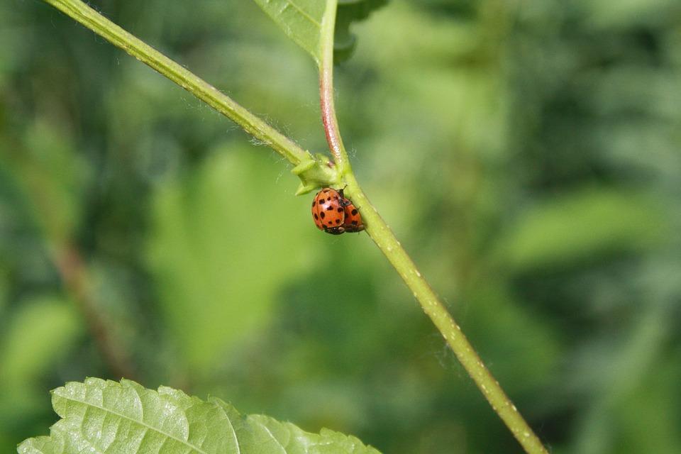 Leaf, Nature, Plant, Summer, Garden, Ladybug