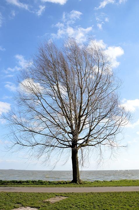 Tree, Lake, Nature, Landscape, Environment, Tranquil
