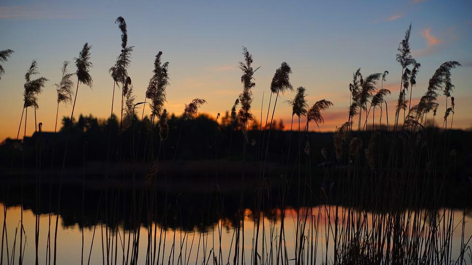 Sunset, Reed, Lake, Nature, River, Water, Landscape