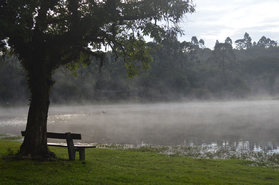 Lake, Mists, Nature, Fog, Water, Outdoors, Trees, Zen