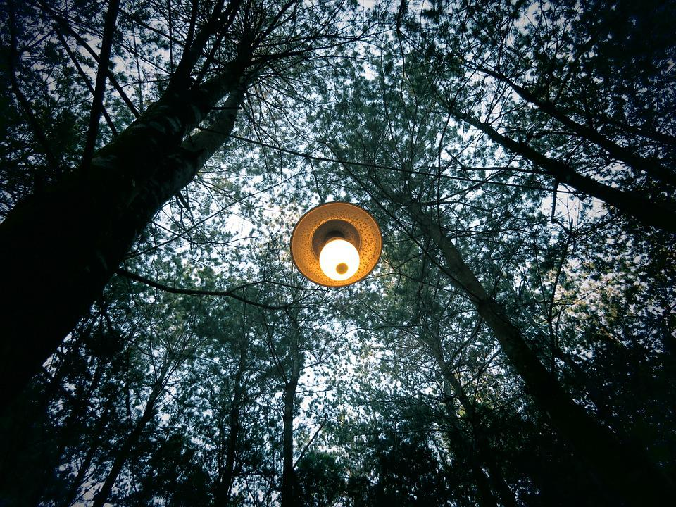 Trees, Nature, Forest, Lamp, Light, Electricity