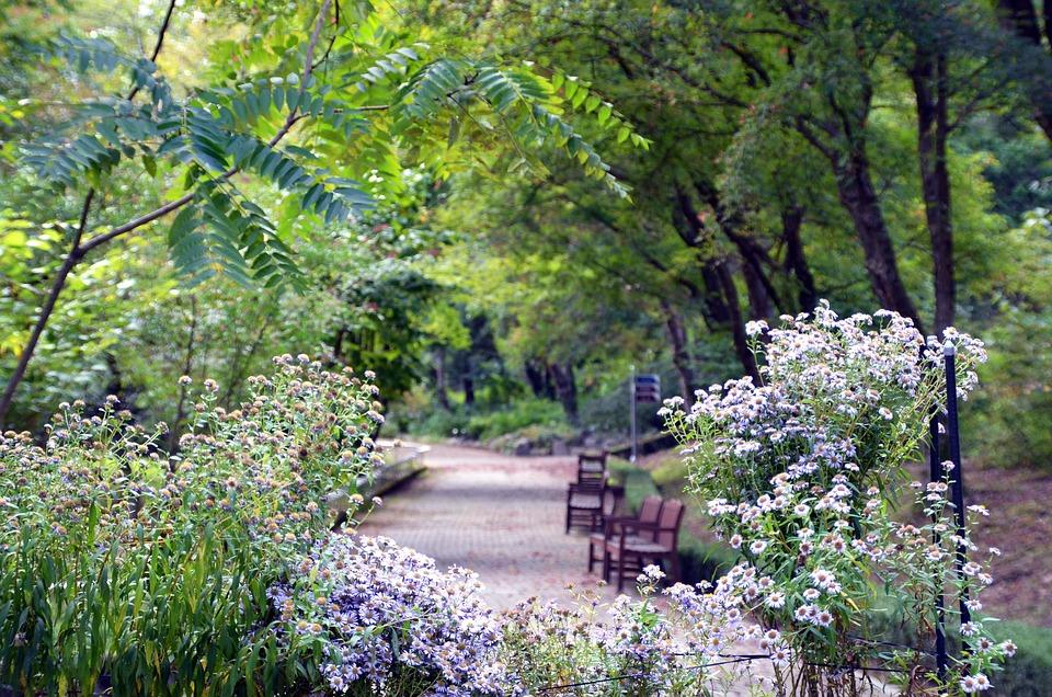 Landscape, Arboretum, Nature, Forest, Wood, Park