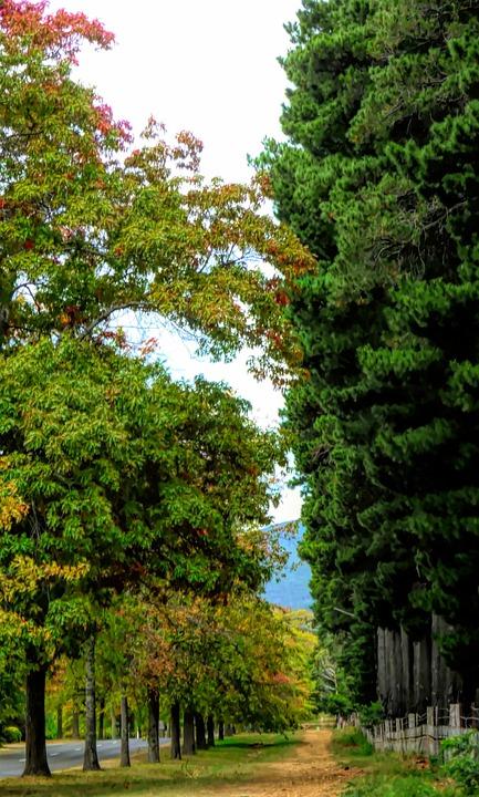 Path, Trees, Autumn, Nature, Landscape, Green