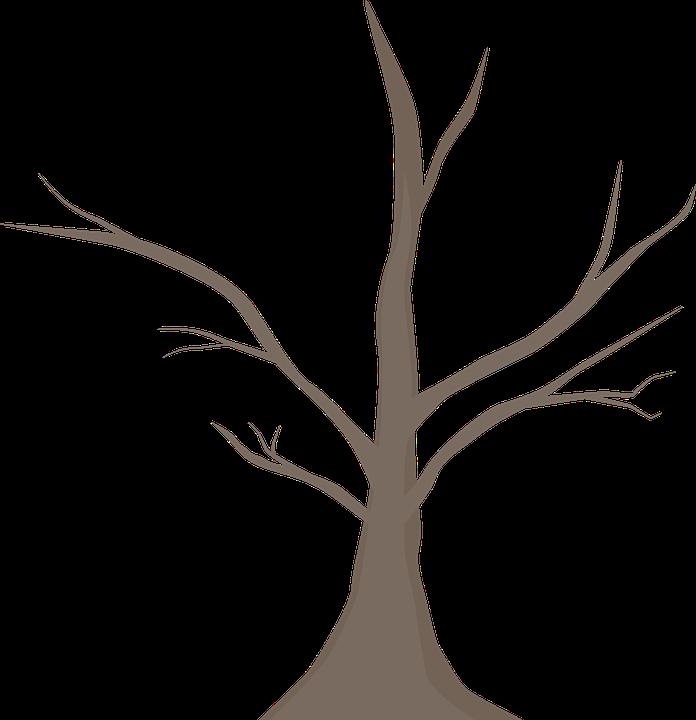 Branch, Tree, Nature, Landscape, Branches, Autumn