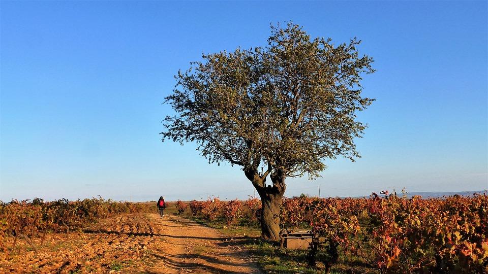 Nature, France, Aude, Tree, Landscape, Blue Sky
