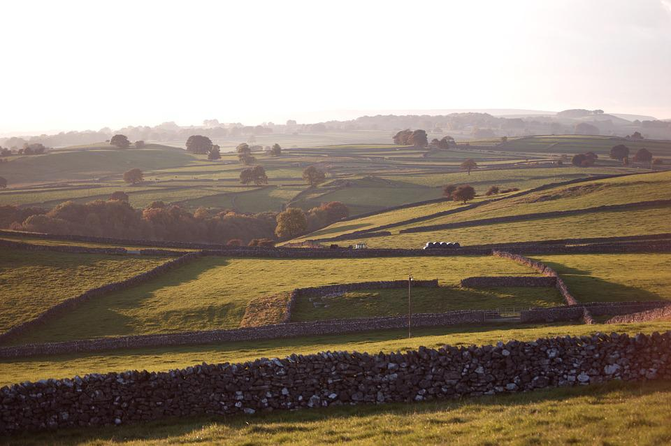 Agriculture, Landscape, Farm, Field, Cropland, Nature
