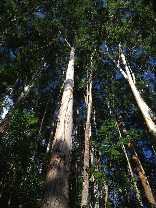 Divine Trees, Nature, Landscape