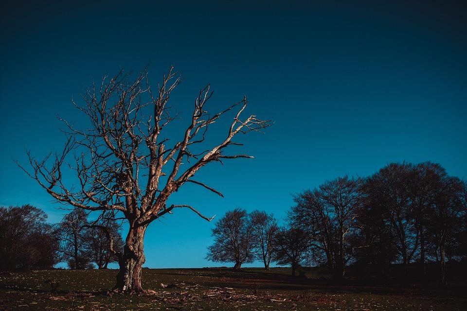 Nature, Tree, Postapokalipsis, Field, Landscape