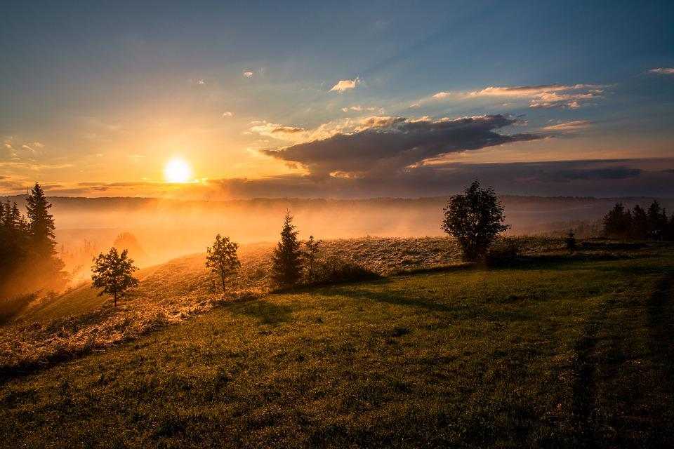 Dawn, Dusk, Fog, Grass, Landscape, Mist, Nature