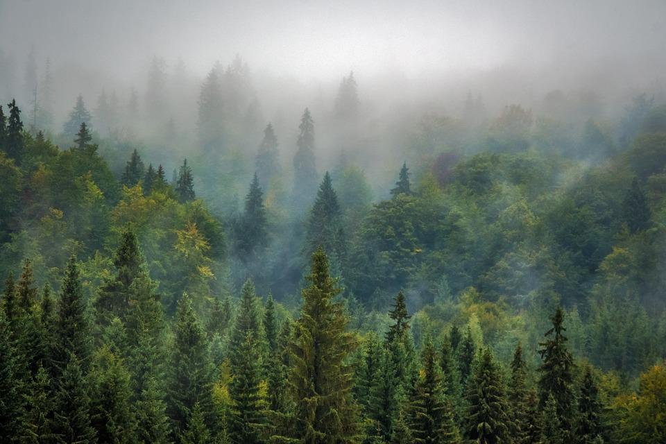 Landscape, Nature, Forest, Fog, Misty, Pine