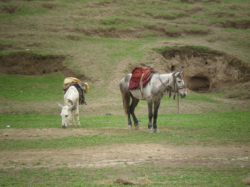 Horses, Hills, Nature, Landscape, Green, Grass, Field