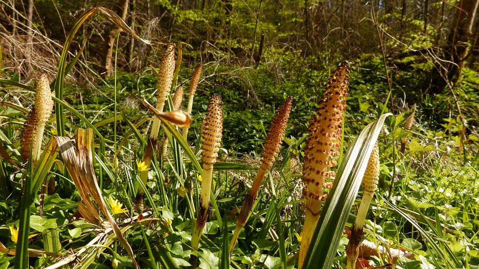 Plant, Horsetail, Nature, Landscape, Green