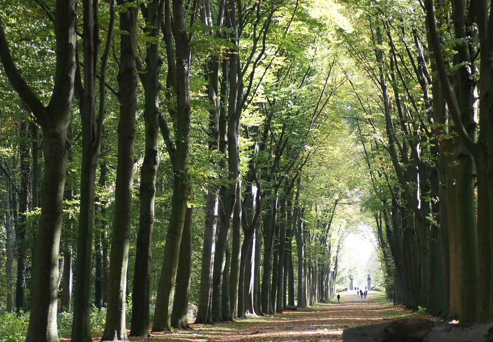 Forest, Tunnel, Light, Nature, Landscape, Tree, Green