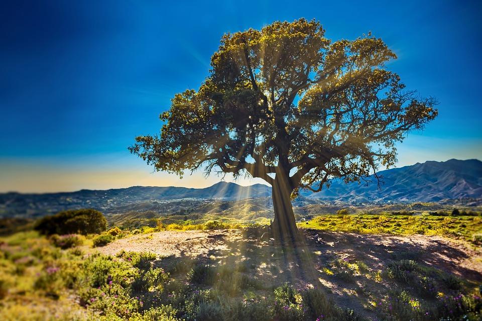 Tree, Sunbeams, Nature, Landscape, Sky, Light, Meadow