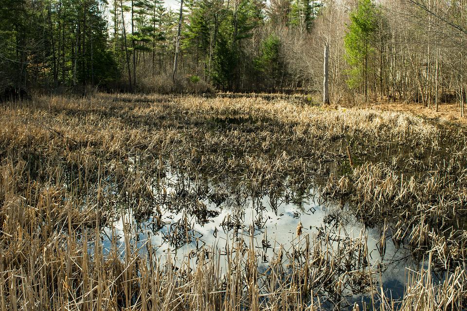 Nature, Outdoors, Landscape, Grass, Water, Tree