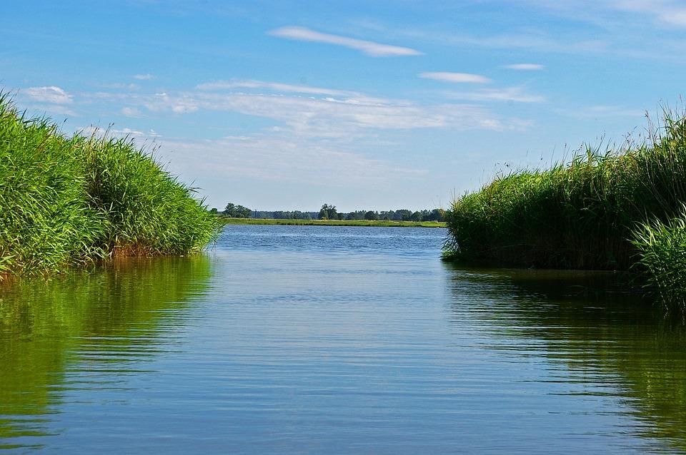 Reed, Reed Belt, Landscape, Nature, Water, Bank, Plant