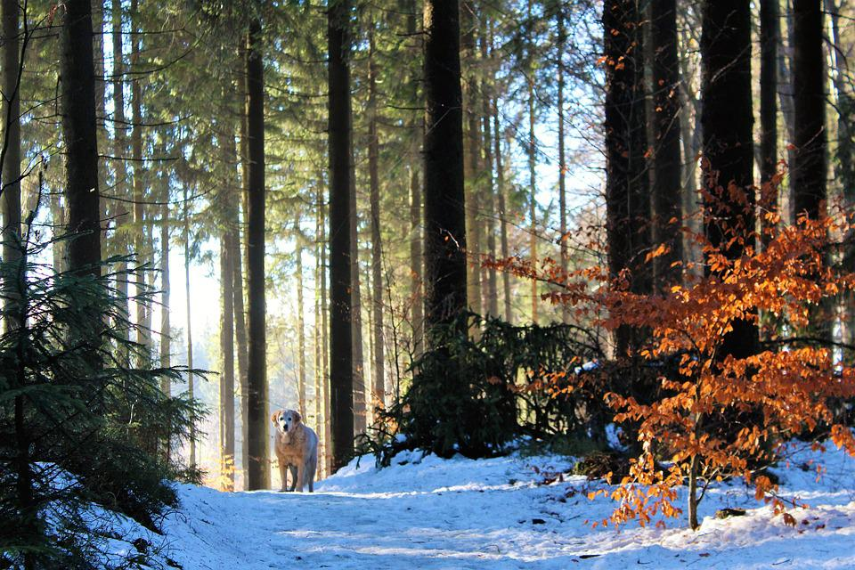 Wood, Tree, Nature, Season, Fog, Landscape, Winter