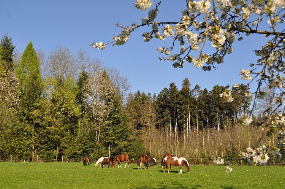 Tree, Nature, Landscape, Sky, Outdoors, Cherry Blossom
