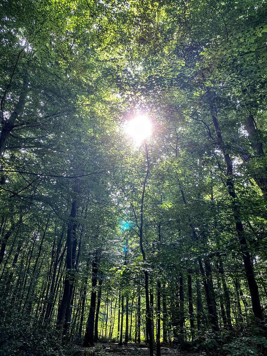 Forest, Woods, Sunshine, Sunset, Nature, Landscape