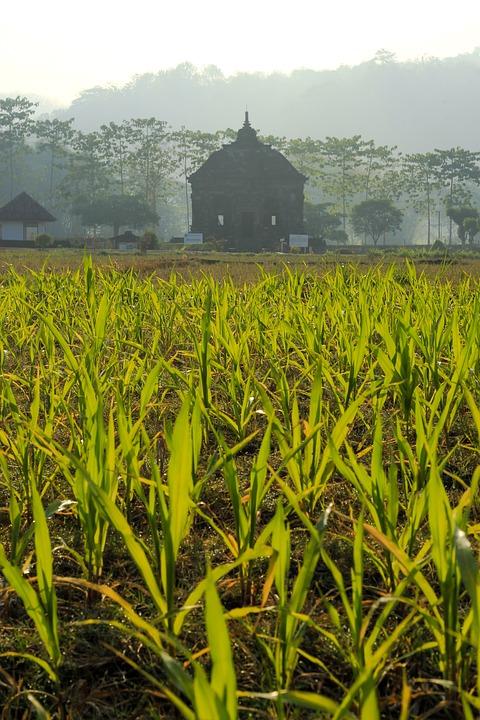 Temple, Prambanan, Landscape, Nature