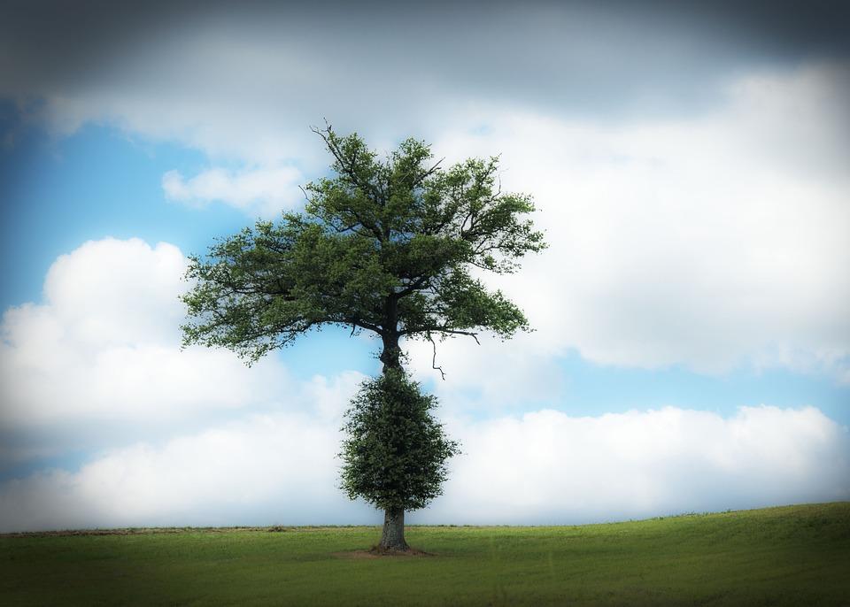Tree, Hill, Landscape, Nature, Sky, Clouds, Dream