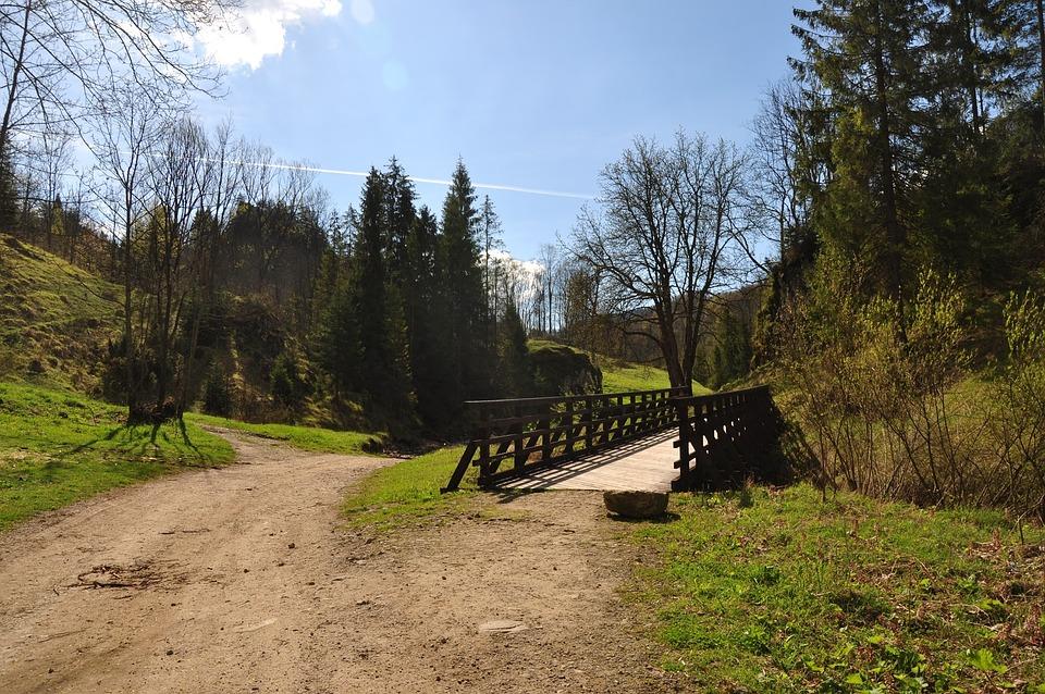 Bridge, Way, Tree, Nature, Wooden Bridge, Landscape