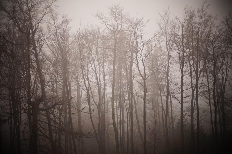 Winter, Fog, Trees, Forest, Nature, Landscape