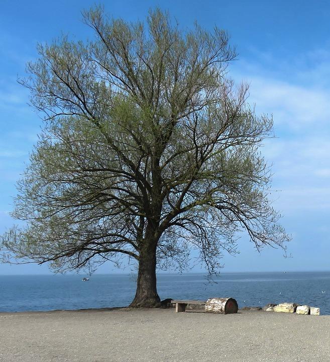 Tree, Blue, Landscape, Sky, Nature, Water, Summer