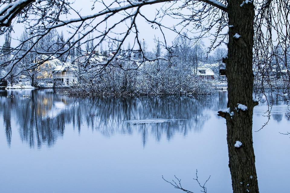 Winter, Landscape, Snow, Cold, Tree, Branches, Nature