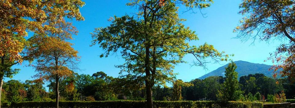 Nature, Tree, Wood, Landscape, Sky