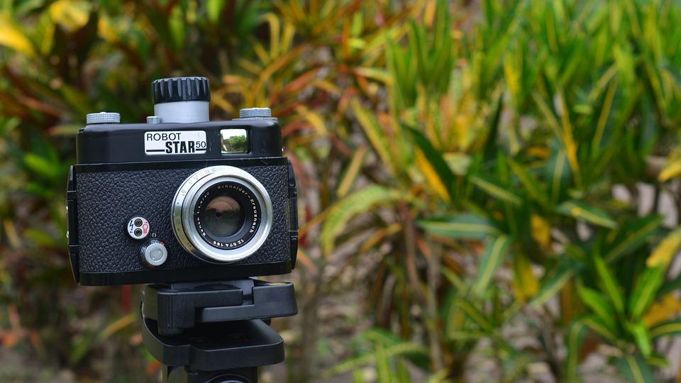 Camera, Similar, Photography, Outdoors, Nature, Lawn