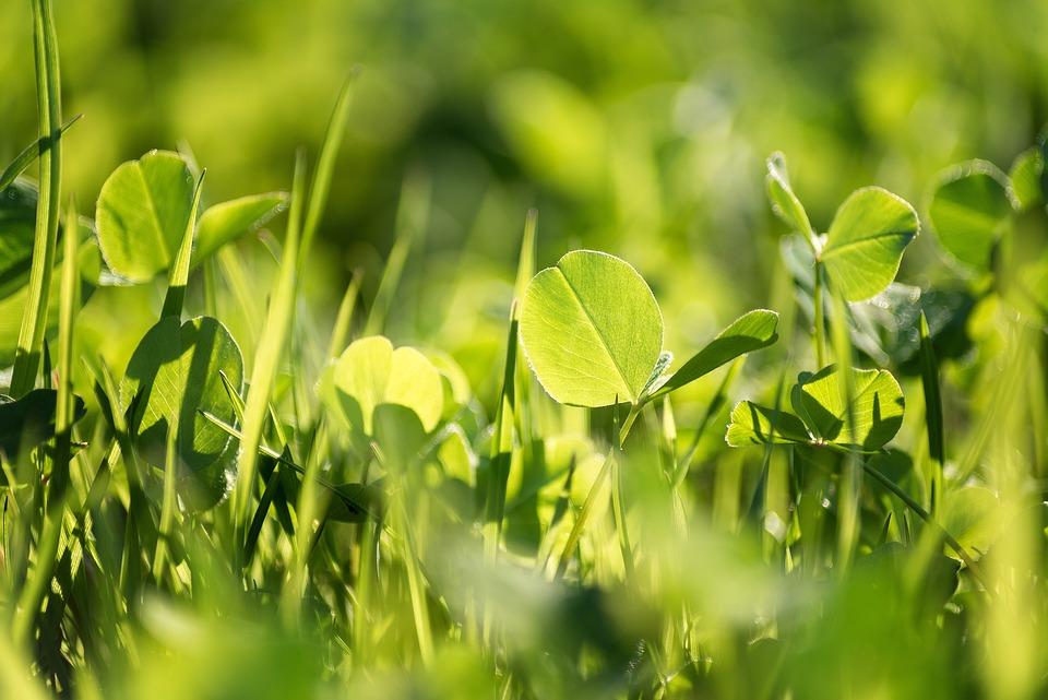 Grass, Green, Summer, Nature, Meadow, Field, Lawn