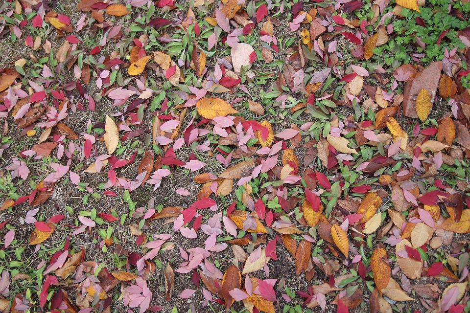 Autumn, Leaves, The Leaves, Autumn Leaves, Leaf, Nature