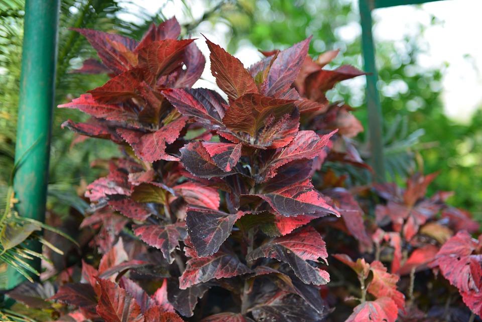 Leaf, Flora, Nature, Fall, Tree