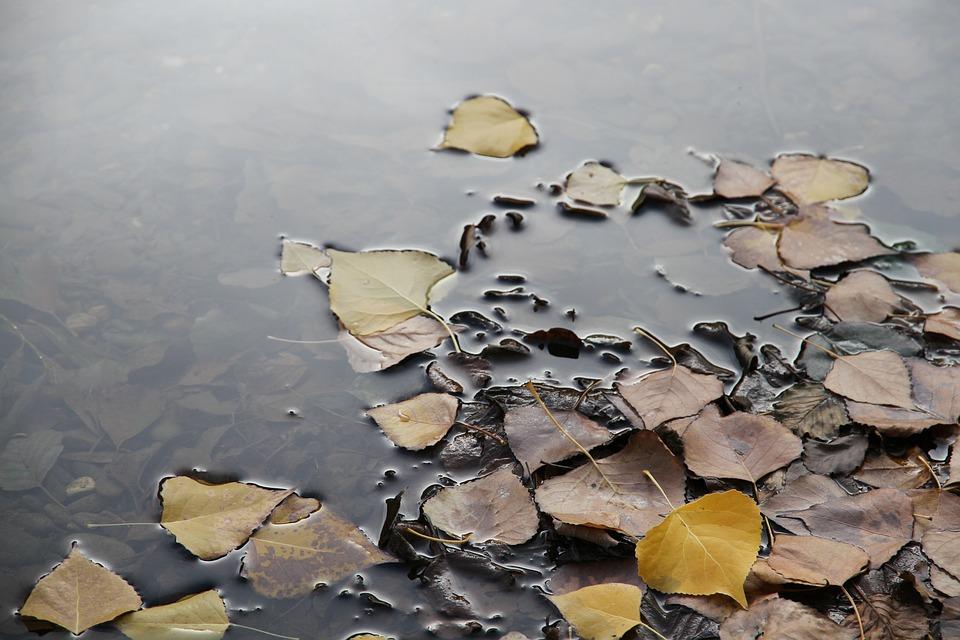 Leaf Floating, Nature, Autumn