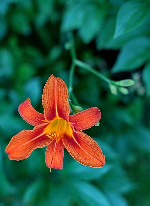 Nature, Flower, Leaf, Garden, Summer, Growth, Color