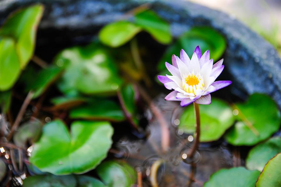 Leaf, Plants, Nature, Flowers