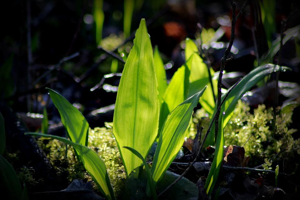 Nature, Plant, Leaf, Growth, Fresh, Spring
