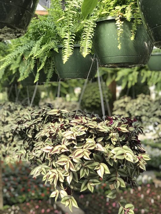 Plants Spring, Leaf, Flora, Nature, Agriculture, Garden