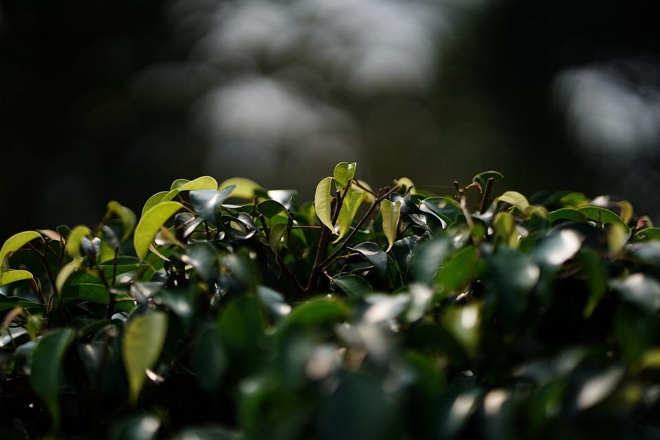 Leaf, Nature, Backgrounds, Green Color, Textured