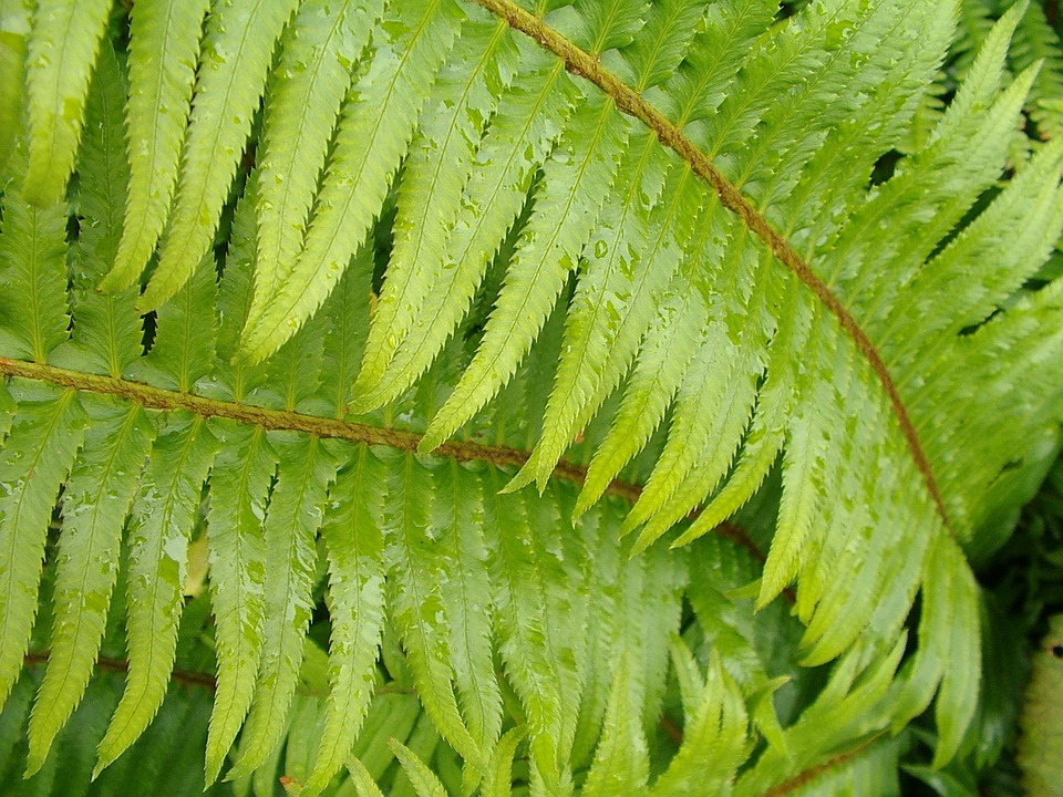 Plant, Leaf, Nature, Growth