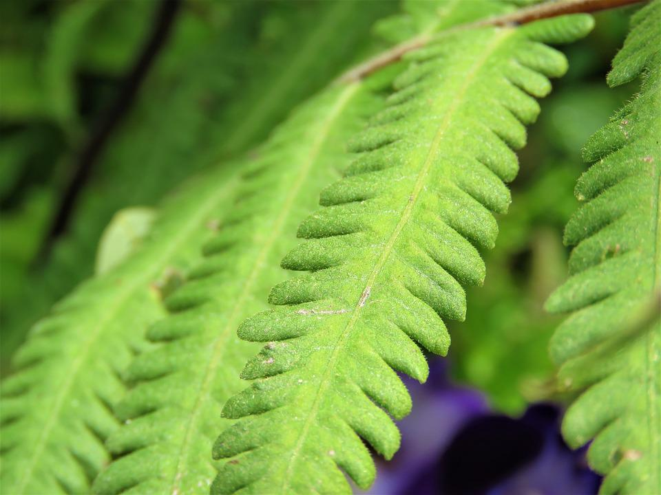 Leaf, Flora, Fern, Growth, Nature, Outdoors, Lush