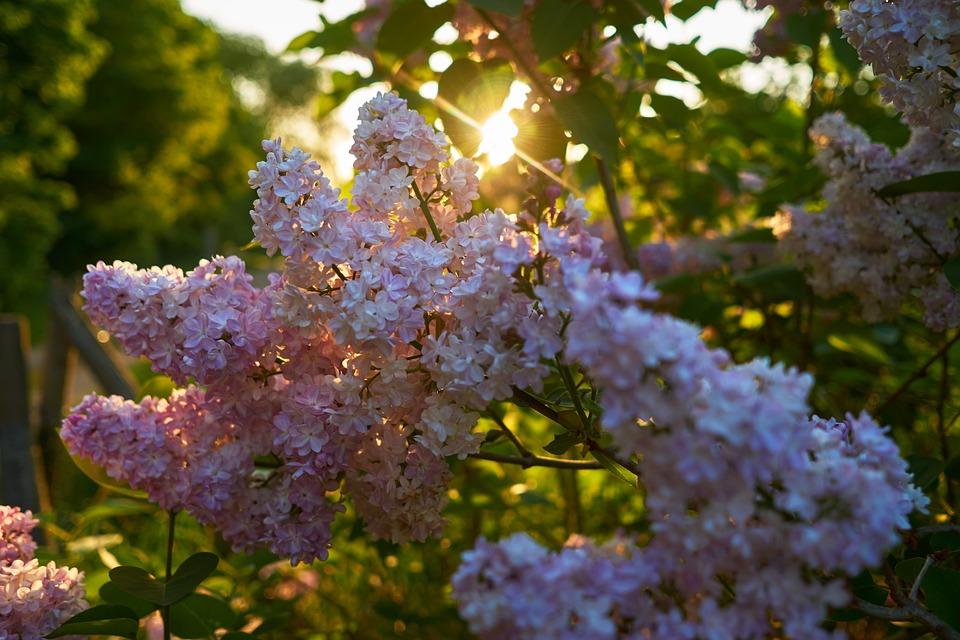Flower, Plant, Nature, Season, Garden, Tree, Leaf