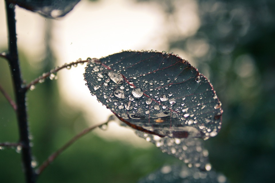 Nature, Raindrop, Leaf, Rain