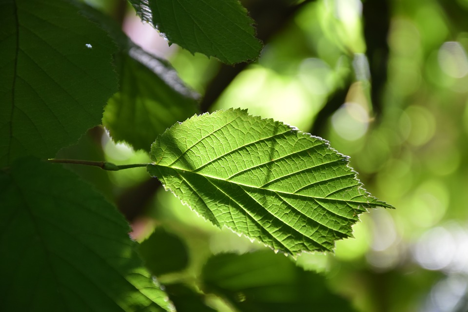 Leaf, Tree, Foliage, Nature, Green, Forest, Branch