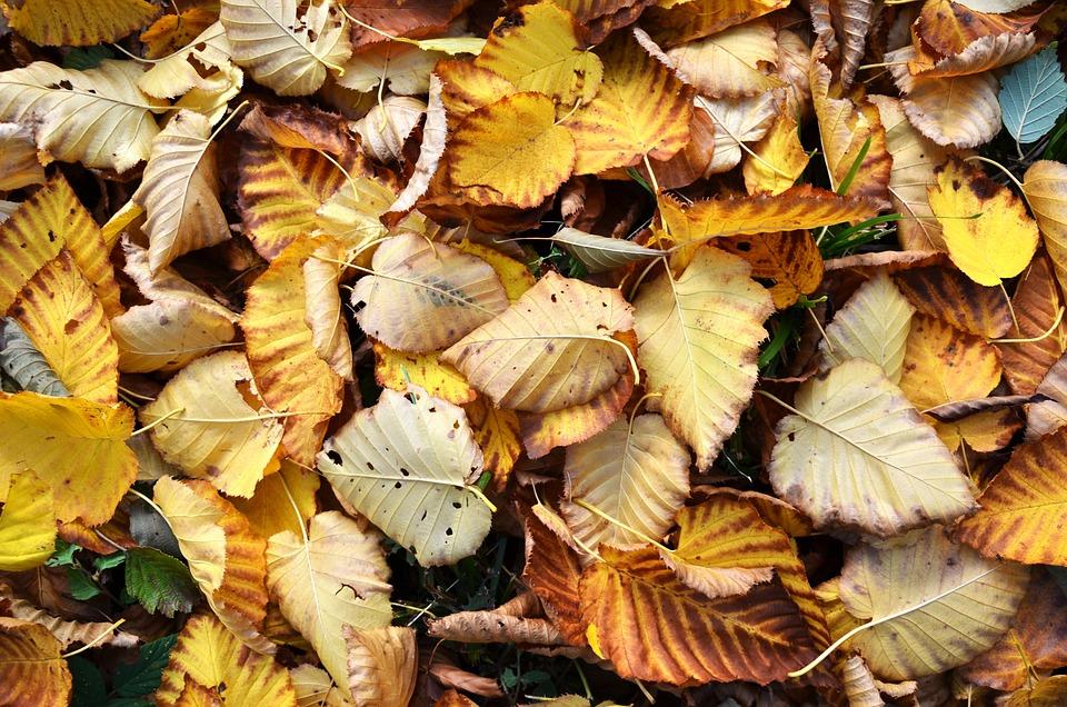 Leaf, Autumn, Nature, Tree, Colorful, Wood, Color, Fall