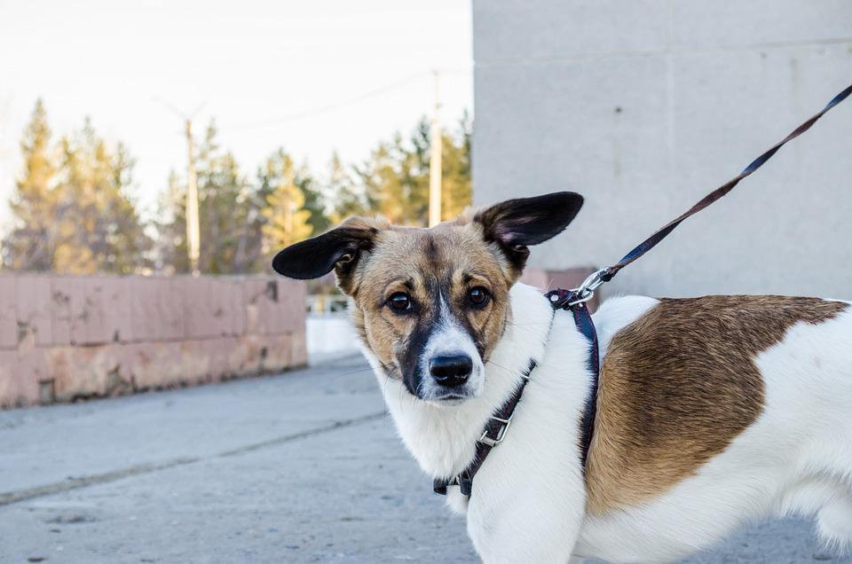 Dog, Pet, Dog On A Leash, Nature, City, Leash
