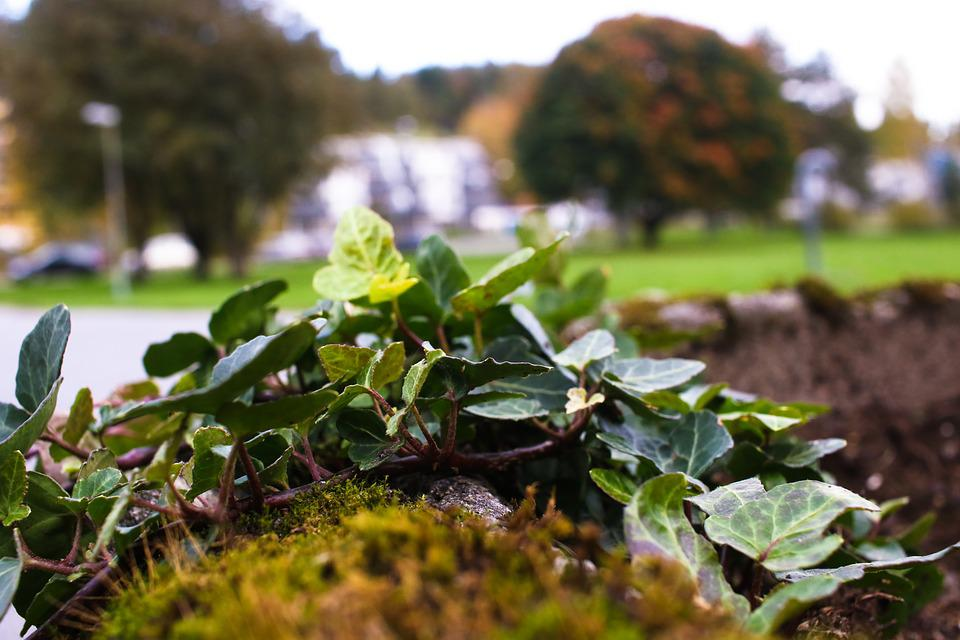 Herb, Autumn, Leaves, Fall, Nature